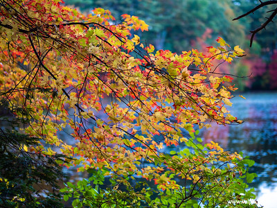 Fall Color with Pond