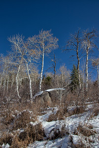 Winter Aspens Blue Sky Snow Portrait 11-2-19 Beaver Creek Colorado