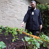 Staff photo by Mark Hughes<br /> Chef Michael James points to the sweet basil planted in a raised garden bed in one of the seven courtyards at EASTAR Health System. In about 30 days, up to 12 fresh herbs will be used in patients' food. Some of the herbs being grown are cilantro, oregano, mint, dill, sage and parsley. James also planted green onions, cherry tomatoes and cucumbers.