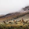 Elk Herd During Rut