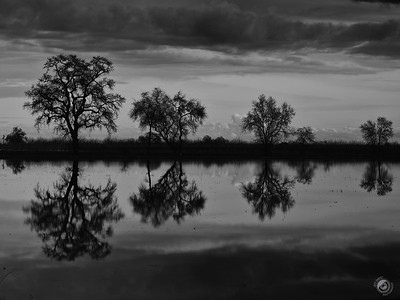 Winter Reflections in California - - - - @getolympus Om-D E-M1 MKii & 12-100 Pro lens using Hi-Rez Mode   #reflection_shotz #reflection_perfection #raw_reflection #darkandmoody #rebel_bnw #rebel_sky #reflectionjunkiez #reallyrightstuff #blacknwhite_perfection #bnw_captures #bnw_planet_2019 #bnw_drama #bnw_unique #reflectiongram #earth_reflect #insta_sky_reflection #stunnersoninsta #california4fun #onlyinnortherncalifornia #californialife #getolympus #reflectlicious #reflectionmagazine #moodygram #ipulledoverforthis