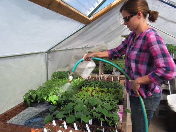 Staff photo by Cathy Spaulding<br /> Cassie Herringshaw of Peace of Prairie Organic Farm sprays basil plants.