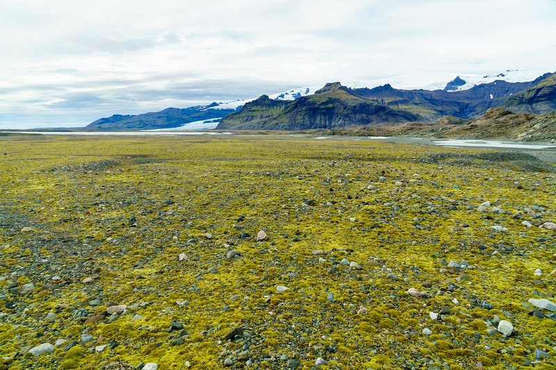 Glacial gravel and lichen near Jokulsarlon, Iceland.