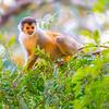 Monkey in Costa Rica jungle