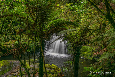Beautiful Catlins waterfall in lush green native bush and punga ferns