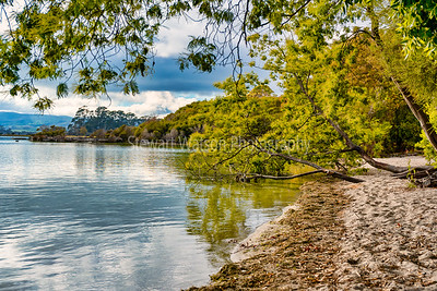 The tree lined shores of Lake Tarawera in Rotorua New Zealand