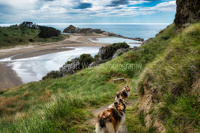 Walking our two rough coated sable collies up Castle Rock at CastlePoint in Wairarapa New Zealand
