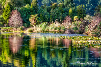 Reflections of nature. Dunhams Point Reserve, North Island