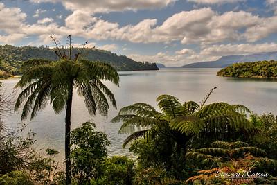 Lake Tarawera through the ferns