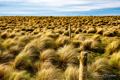 The windswept terrain at Slope Point, NZ's southern most point, where only tussock grass seems to survive
