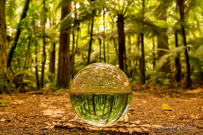 A little bit of crystal ball magic in the Redwoods Rotorua
