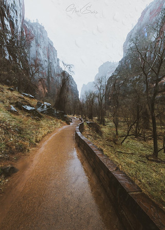 Zion NP in the Rain - Print