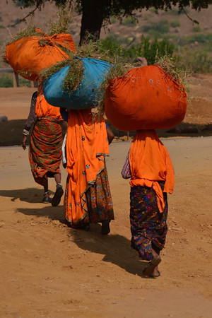 Three Women Head Shot - Near Ranthambore National Park, Rajasthan, India