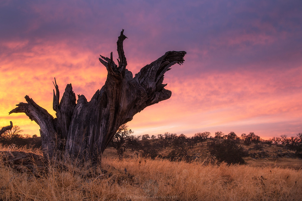 Eastman Ghost Tree - Madera County, CA
