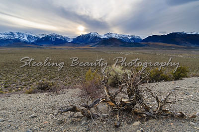 Eastern Sierra high desert