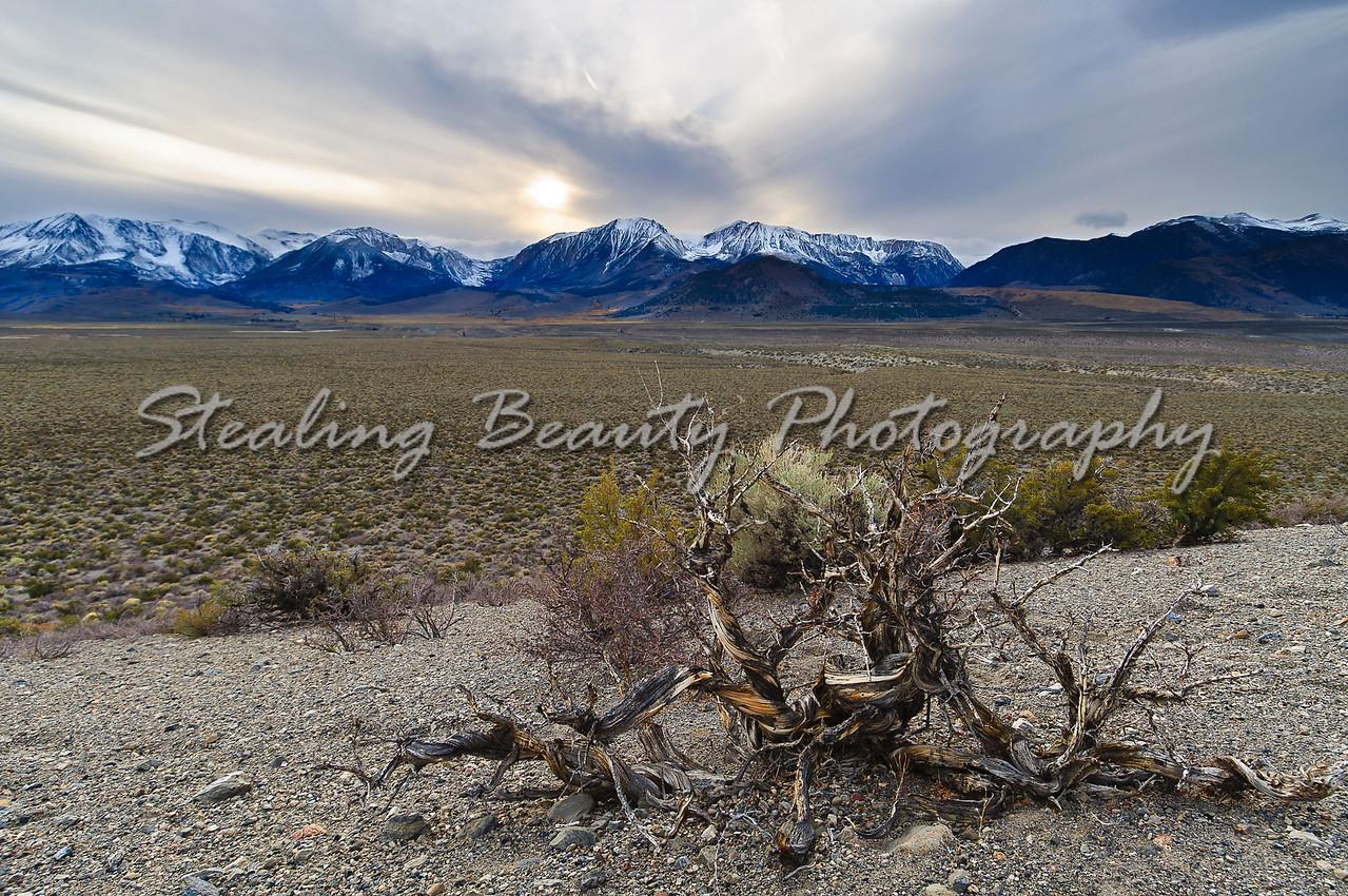 Eastern Sierra high desert