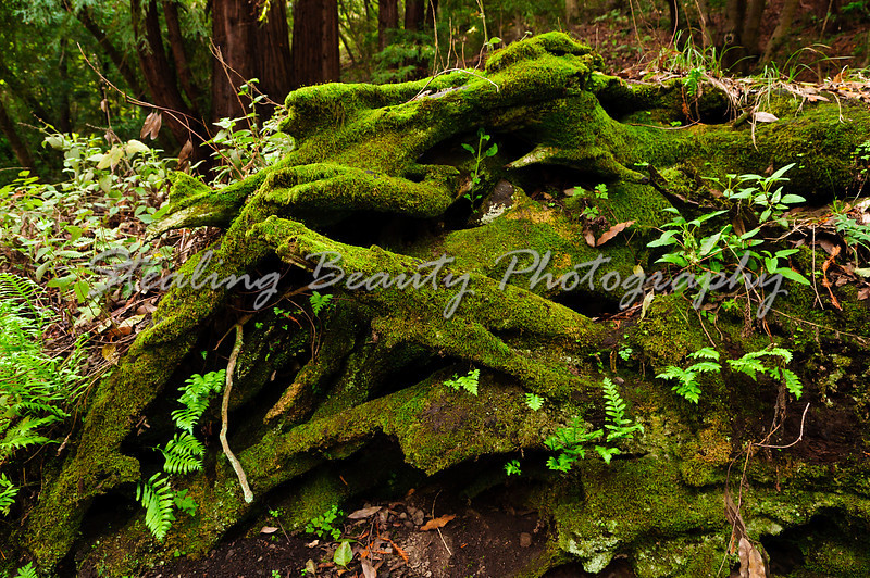 Julia Pfeiffer State Park