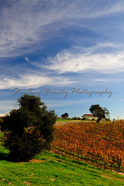 Letitia Winery in Arroyo Grande