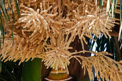 Palm tree bee hive