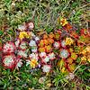 Coastal Flowergarden