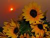 vase full of sun
