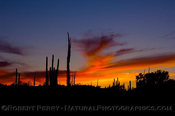 Desert sunset - Catavina, Baja California.