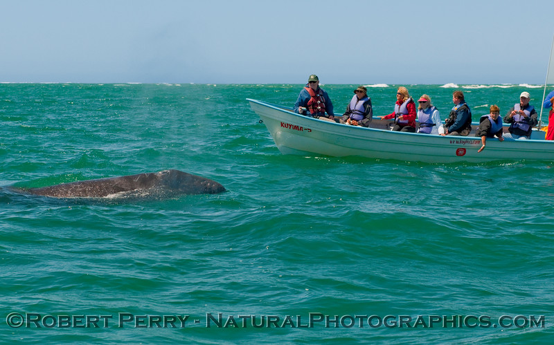 More people in a panga with a whale.