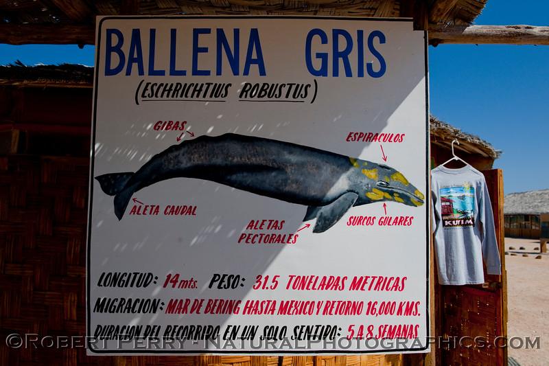 Ballena Gris signage - Laguna San Ignacio.