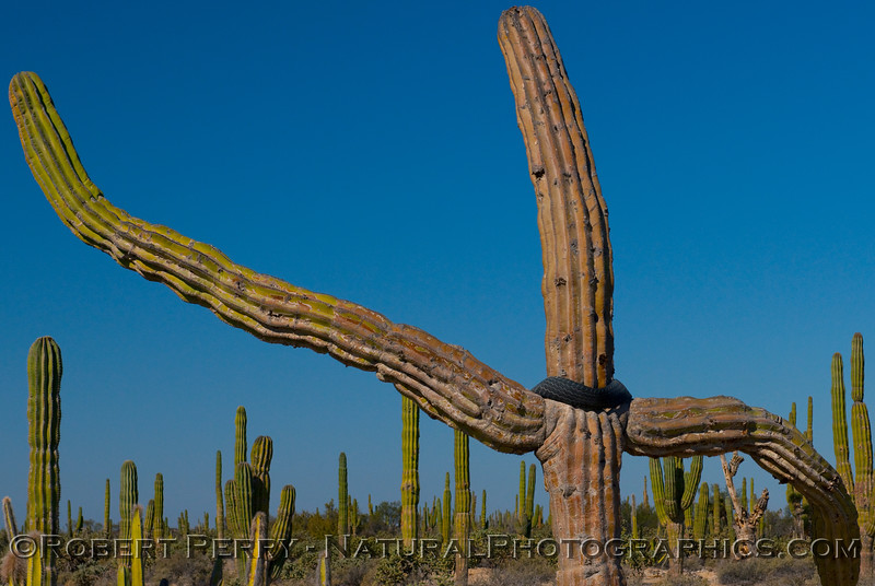 Cactus with tire.