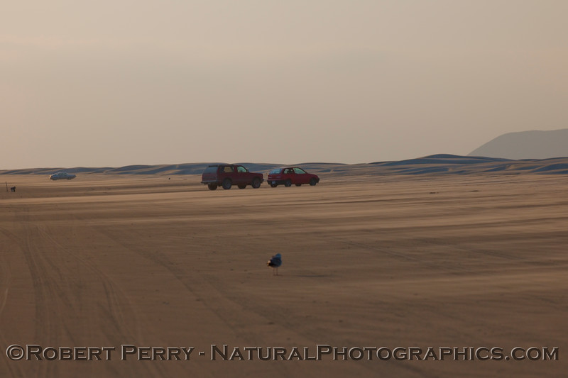Cars and sand - the beach at San Quintin.