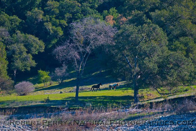 Horses in field near lake 2013 01-27 Lake Cachuma-394