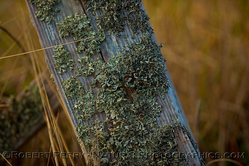 Lichens on fence post near Pt. Cabrillo lighthouse.