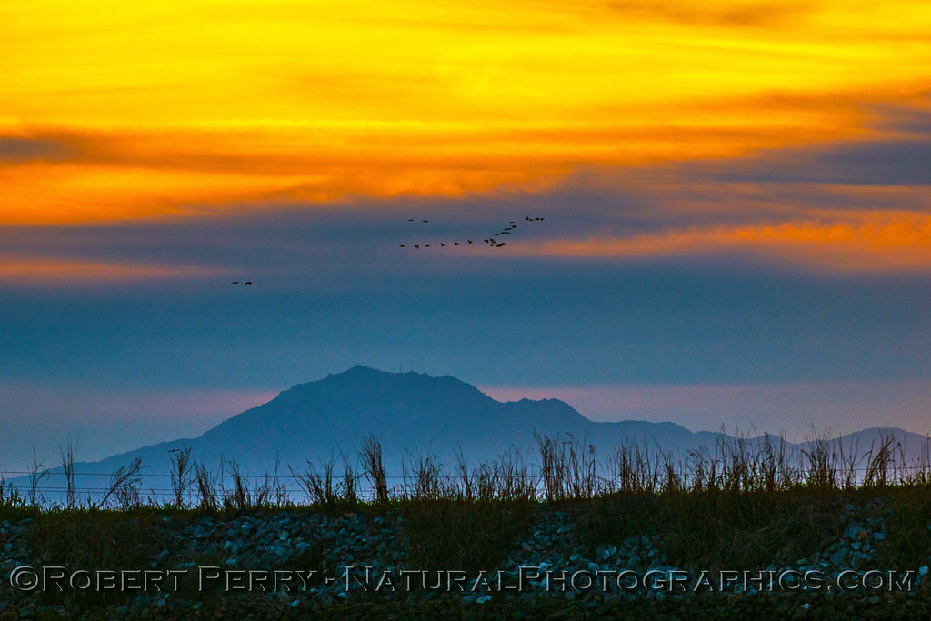 Mount Diablo in the background as a flock of sandhill cranes flies across the sunset in the Delta.