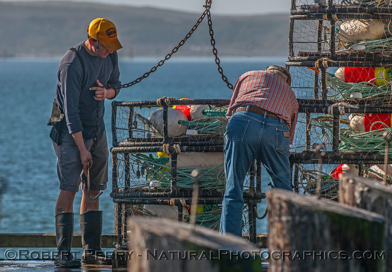 Loading dungeness crab traps on the Condor II.