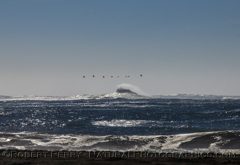 Big wave - Centissima Reef - and a line of brown pelicans.