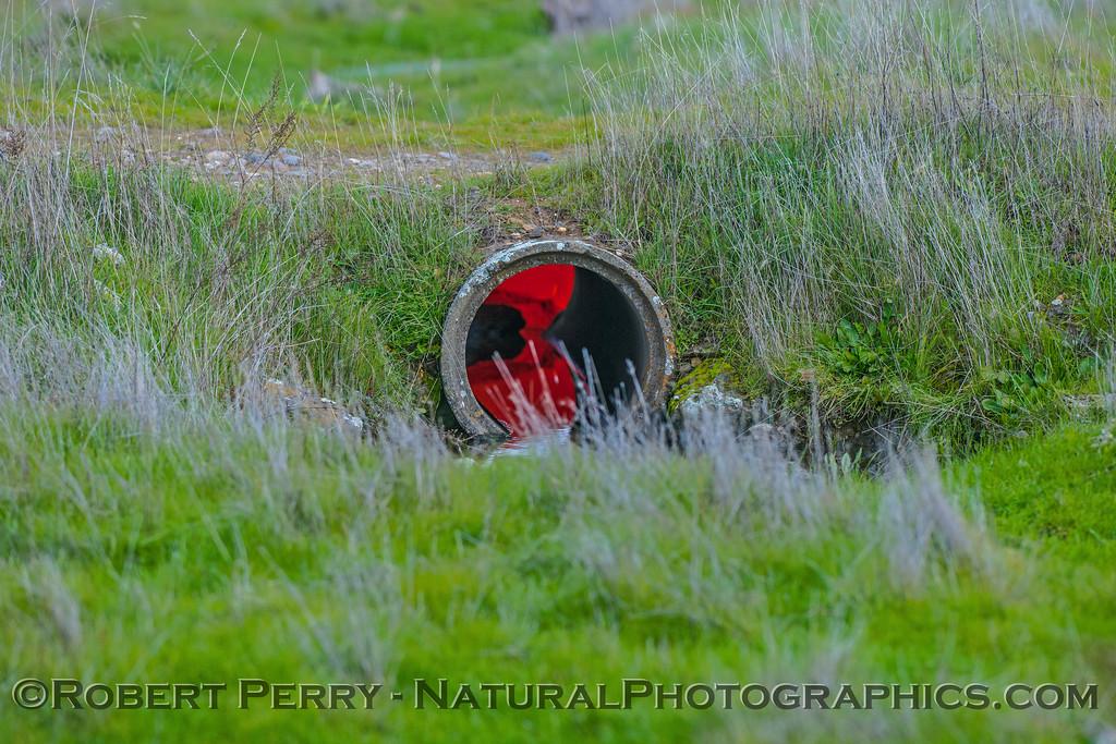 The red drainpipe.