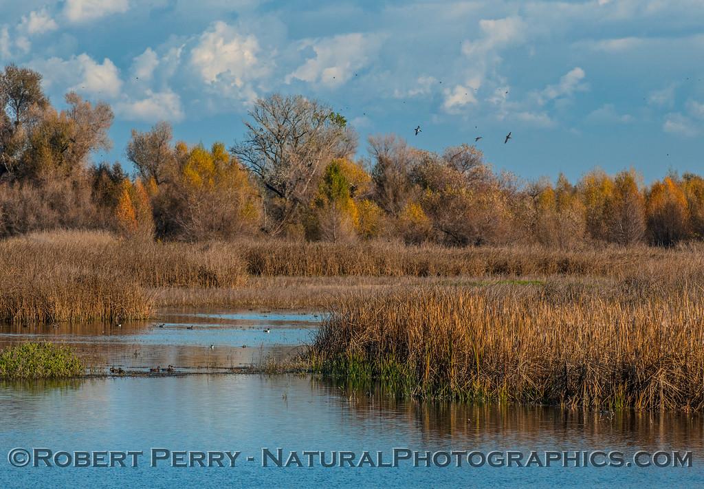 Wetlands.