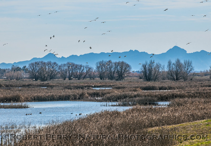 Refuge wetlands and a few geese