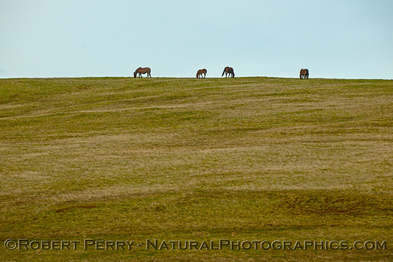 Horses grazing on hilltop.