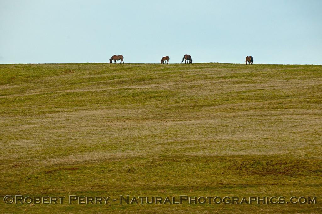 Horses grazing on hilltop.