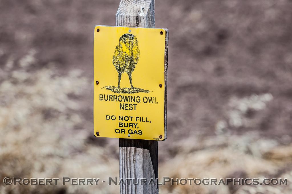 SIGN Athene cunicularia BURROWING OWL WARNING SIGN 2017 03-31 Sonny Bono NWR-005