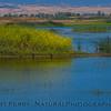 estuary scenes 2017 05-20 Sacramento NWR - 001