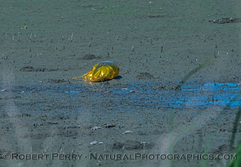 balloon trash in estuary 2017 06-04 Yolo By-Pass - 069