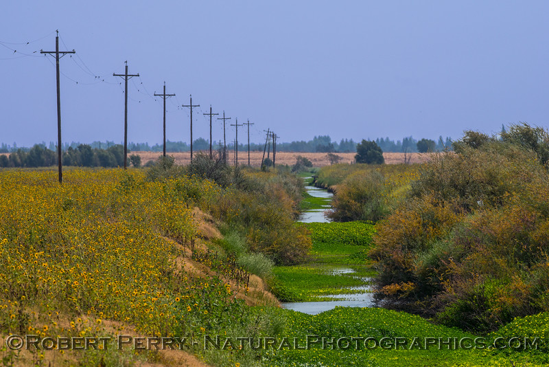 Irrigation canal 2017 08-21 Yolo ByPass-001