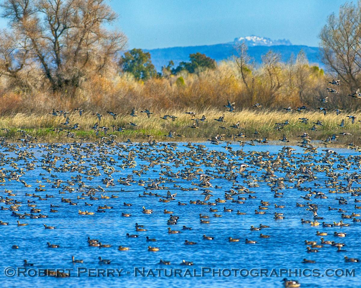 Gray Lodge Wildlife Area - California Central Valley
