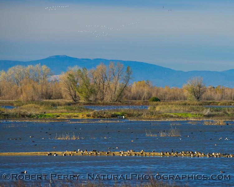 Gray Lodge Wildlife Area - California Central Valley