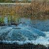 Flooding the wetlands