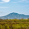 Mt. Diablo, just east of Oakland, Ca is seen from the Delta with lots of airborne geese.