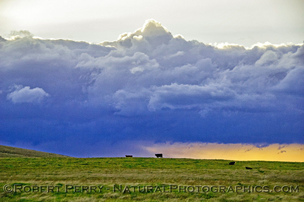 Thunderstorm, grasland and cattle.