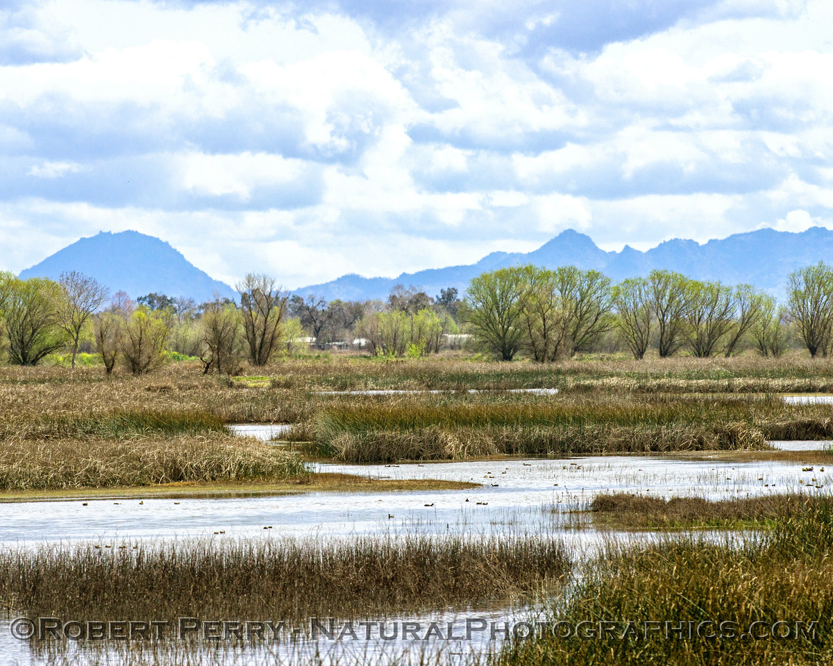 View of the Buttes from Sacramento National Wildlife Refuge estuary